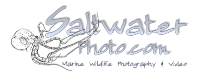 SaltwaterPhoto.com