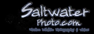 SaltwaterPhoto.com