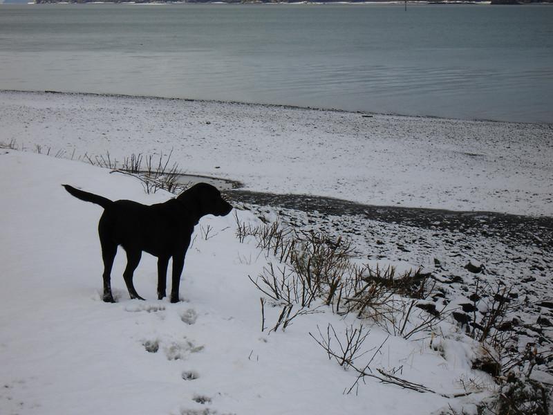 Alaska 2008 143.jpg