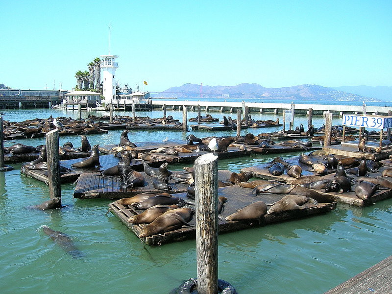 Sunbathing at Pier 39 in San Francisco.
