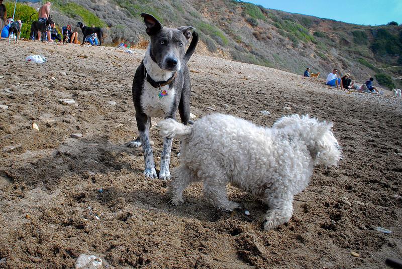 dogs_beach-077.jpg
