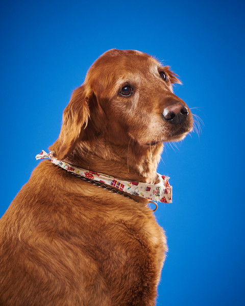 2016_12_24_Christmas Dogs4161.jpg