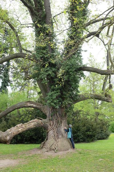 tree-036.JPG