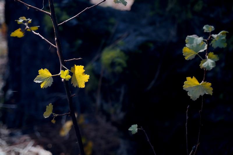 Benham Falls 6.JPG
