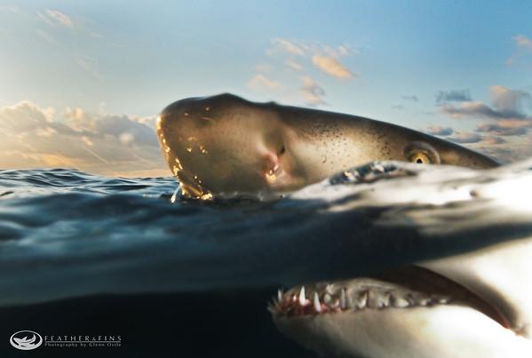 Sharks & Manatees
