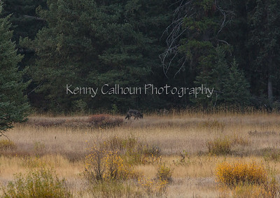 Montana, Yellowstone, Tetons Fall 2012