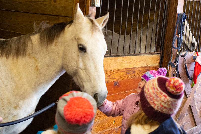 FPC_Horses and Holidays_2019_ ATC99469.jpg