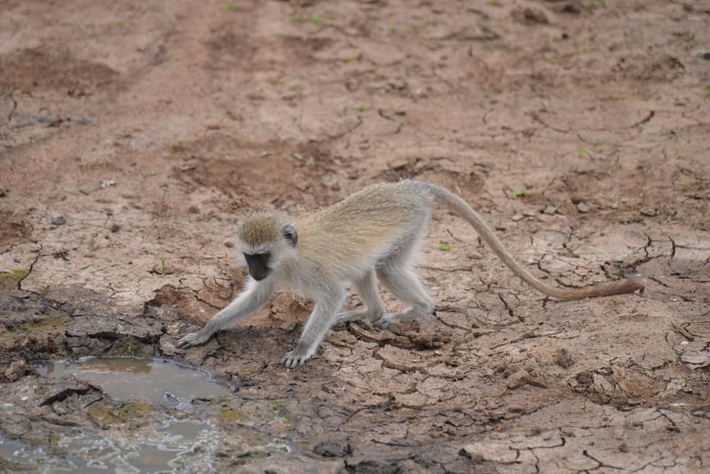 East Africa Safari 262.jpg