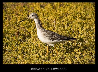 Back Bay Shore Birds