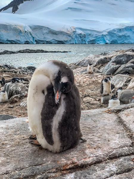 Antarctic-59