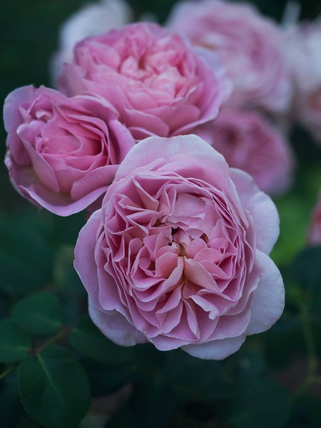 garden_may03-5030024 copy.jpg