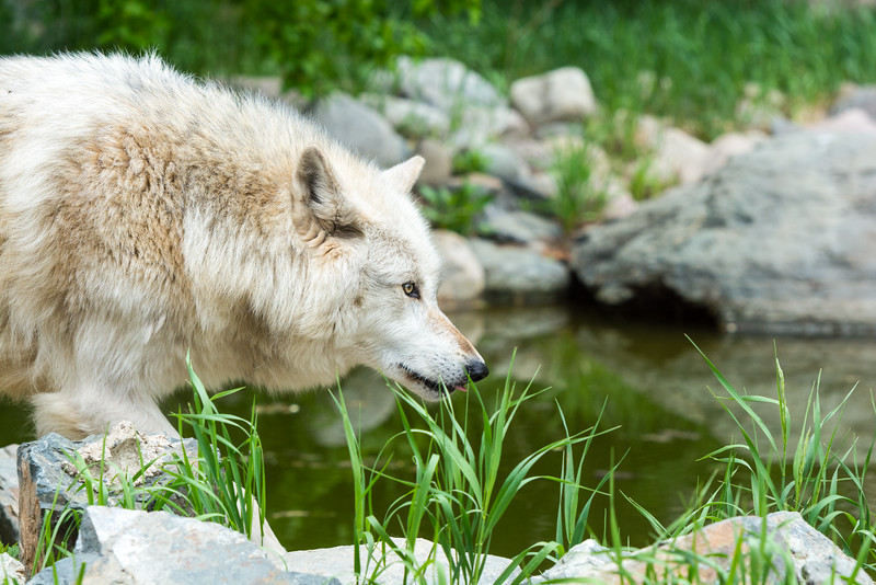 2016 Wolf Institute - Ely, MN-20.jpg