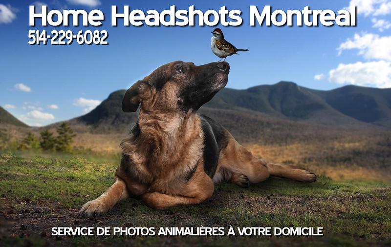 animal-promo.jpg
