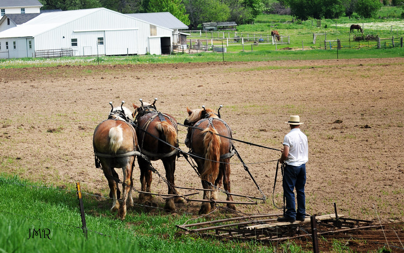 Amish plowing field .jpg