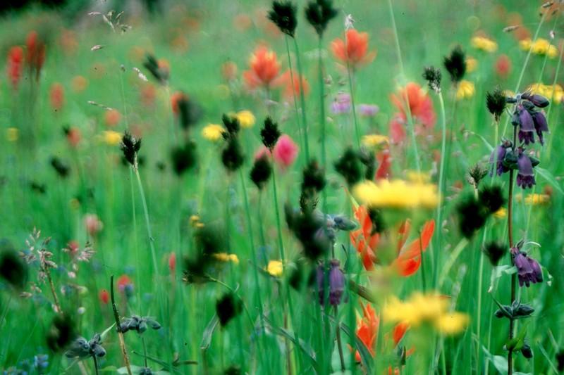 amh FLOWERS (1120).jpg