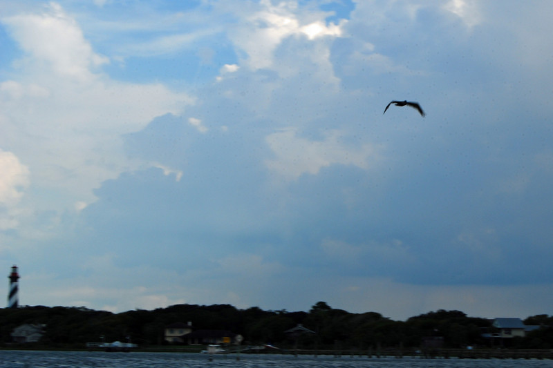 3012 Pelican and St Augustine Lighthouse.jpg