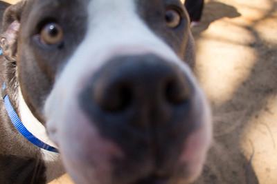 Dog Park 2014-04-12 (Unedited)