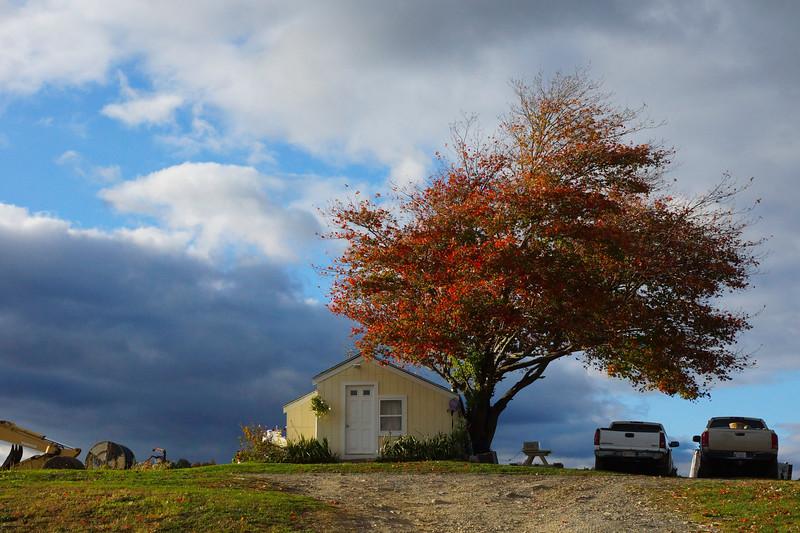One Tree House