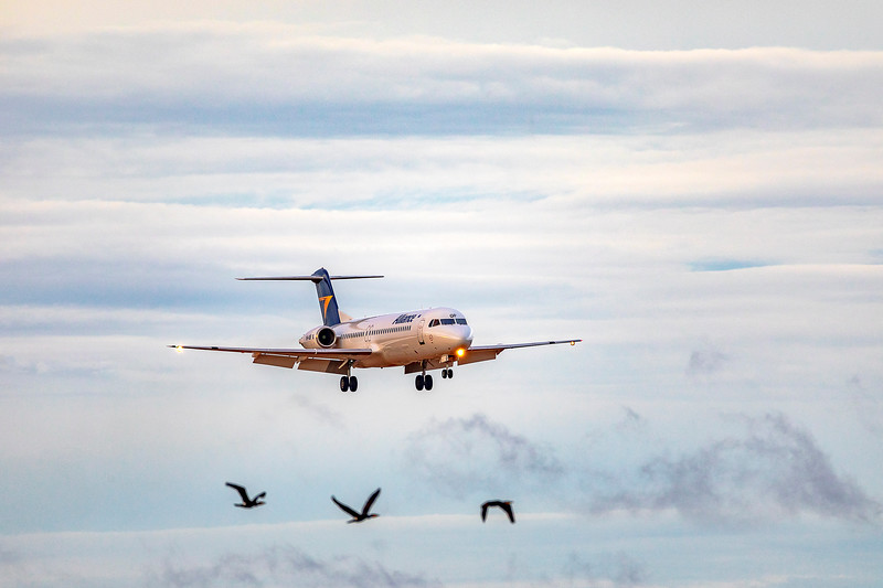 Alliance Airlines Fokker F100 VH-UQF landing at Rockhampton Airport 07-03-2019.