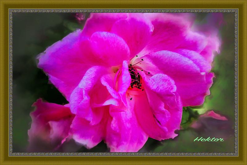 A Flower Is a Flower...Part II