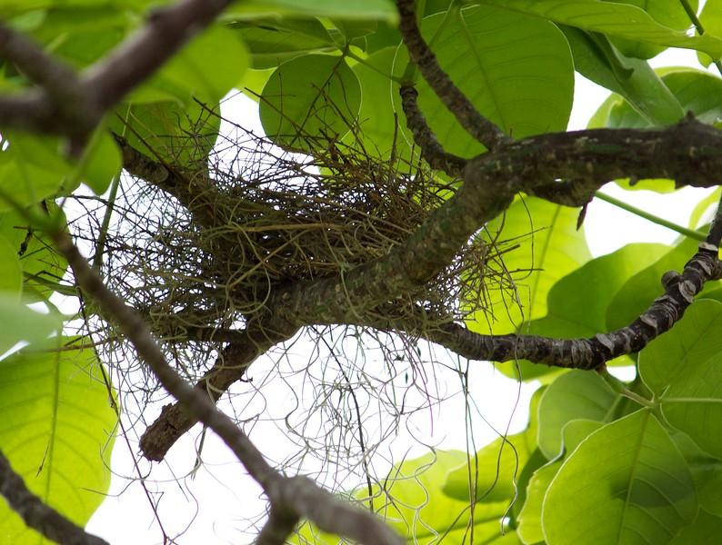 cardinal nest day 2