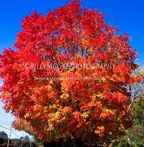 Colors of Fall - 07 Nov 2009
