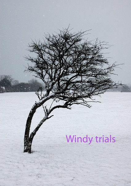 YY Winter snow 010 copy.jpg