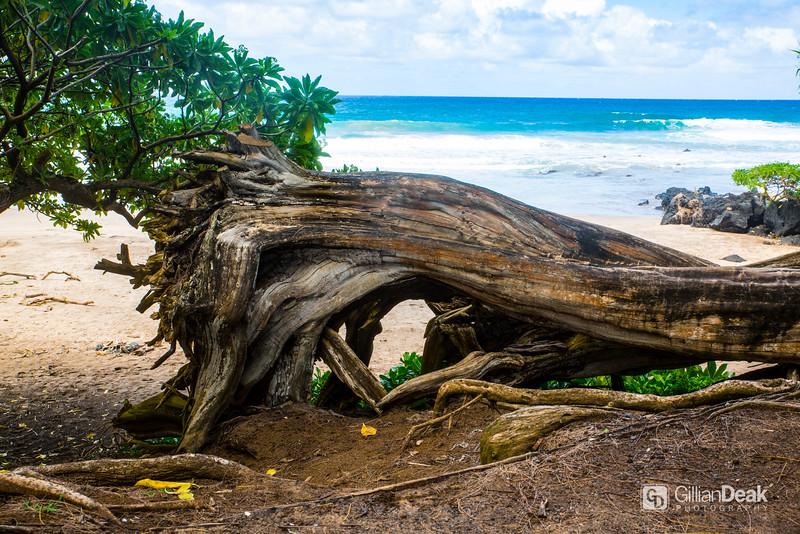 Hawaii2016-215.jpg
