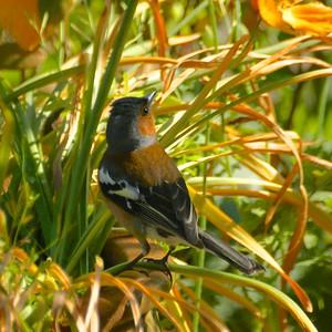 Birds in and around our garden
