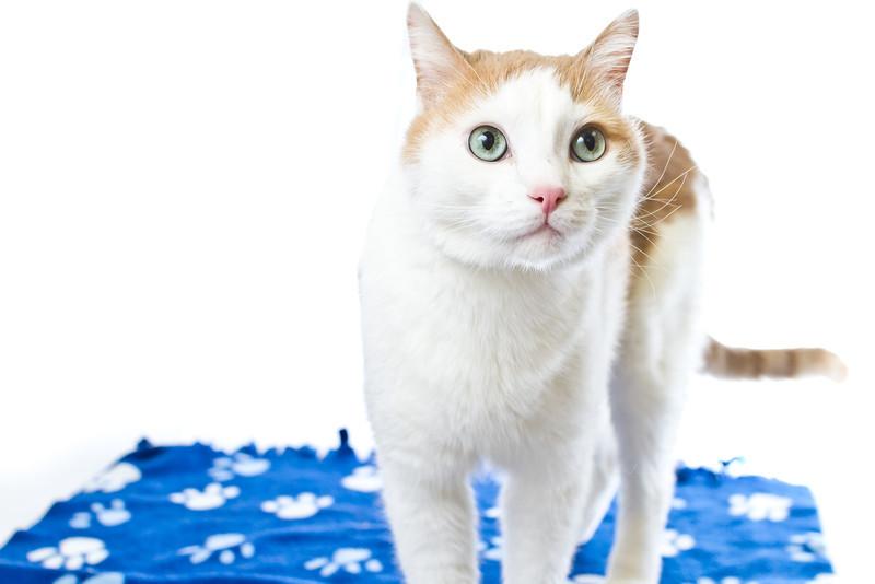 1202_Cats_070.jpg