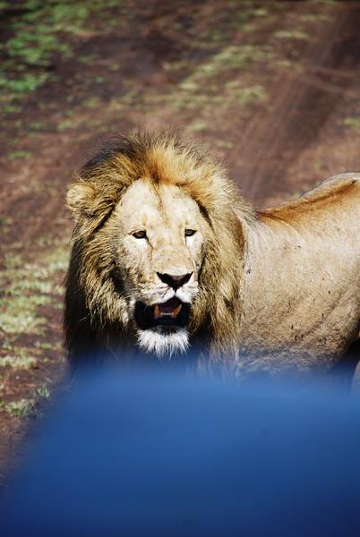 Ngorongoro (111).JPG