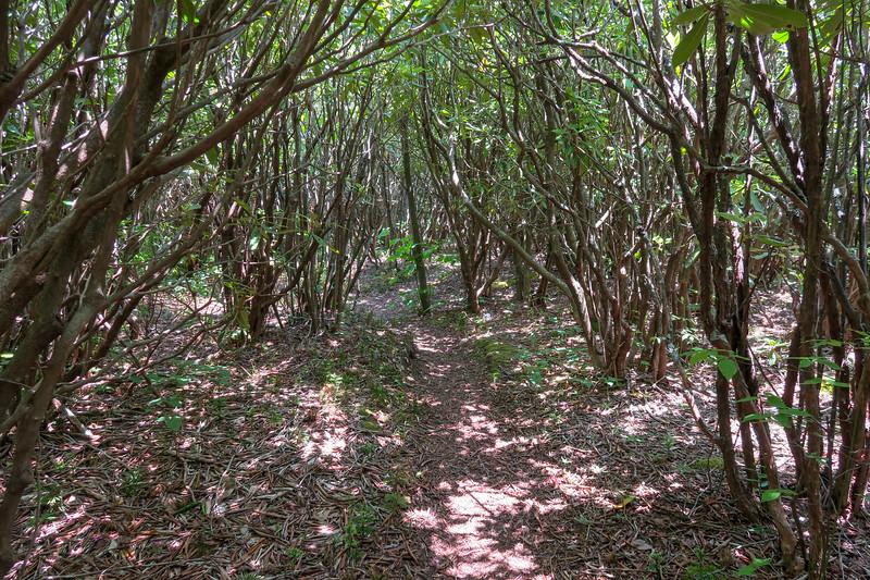 Greasy Cove Trail -- 5,300'