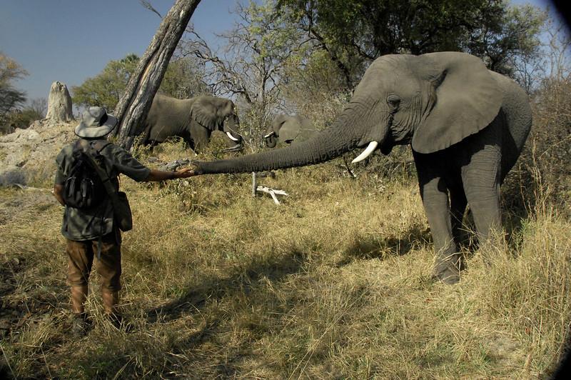 EPV0327 Doug Groves with Morula (larger Jabulani and smaller Thembi in background).jpg