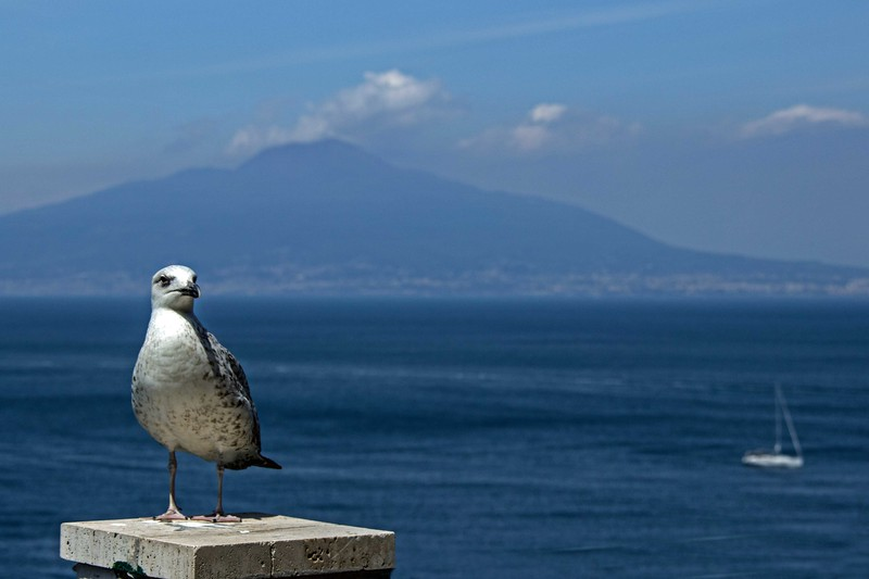 Gull & the Sea