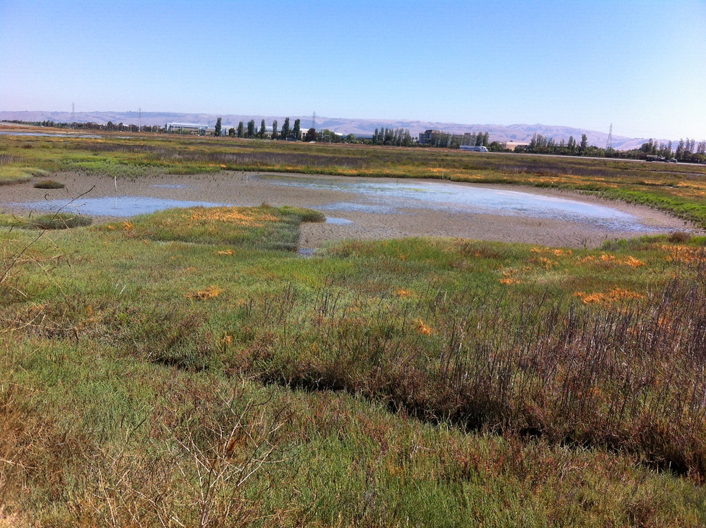 . The marsh has recovered and is thriving.  (Joan Morris/Staff)
