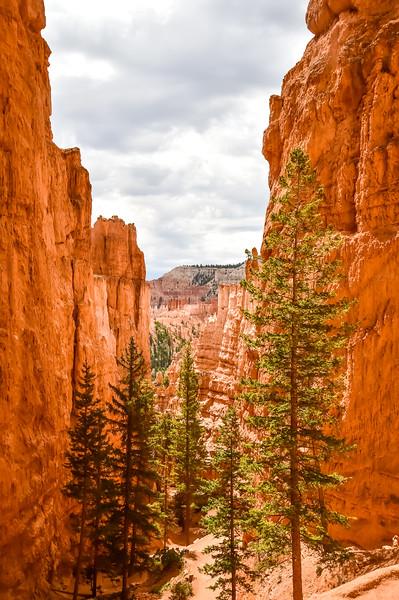 2019 Grand Canyon-128.jpg