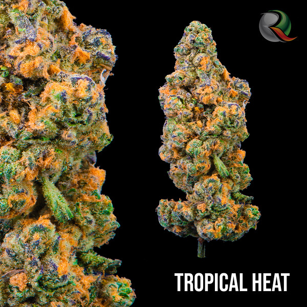 Tropical Heat.jpg