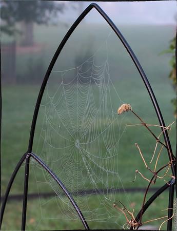 Cobweb in the Mist