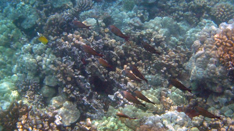 425- 20080416- Hawaii 20-Snorkelling IMG_0584.jpg