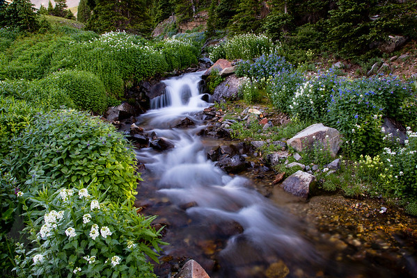 Forests, Streams, and Mountain Scenes