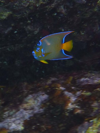 Caribbean-BVI, Bonaire, Tobago, Bequia,Cayman Islands