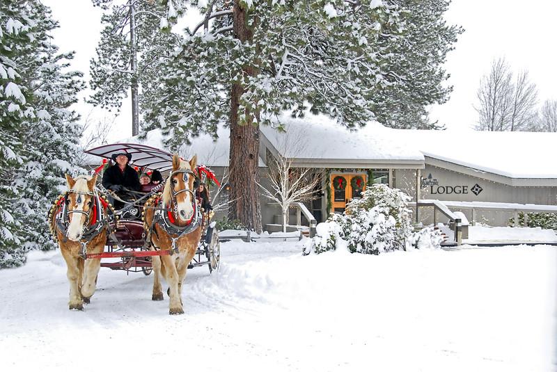 1BBR-Holiday-Lodge-carriage rides__KateThomasKeown-dsc7607.jpg