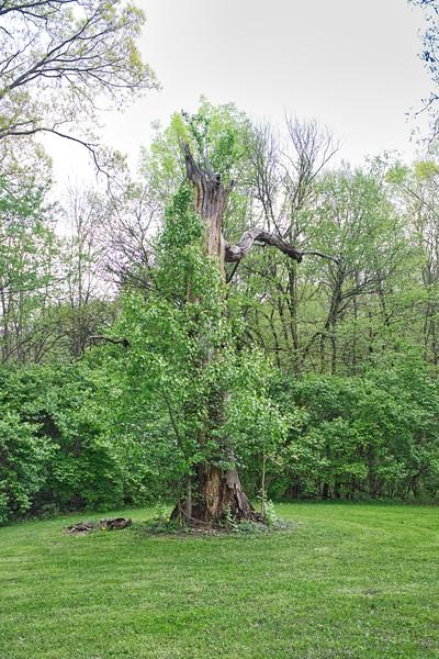Four Seasons Spring Tree
