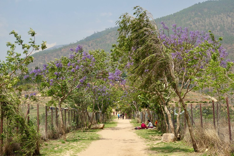 pathway to Chimi Lhakhang temple