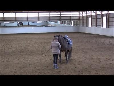 TSRC 2019-02-08 Wildfire Farm Video