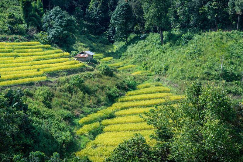 Rice Paddies & Terraces