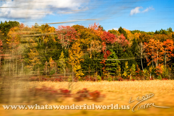 New Hampshire Fall 2014