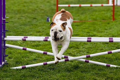 Agility Trials