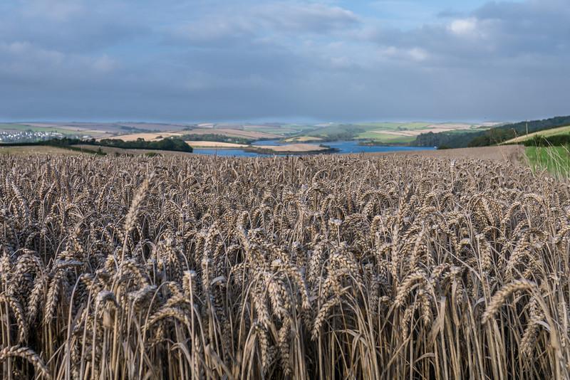 Devon-England-17.jpg