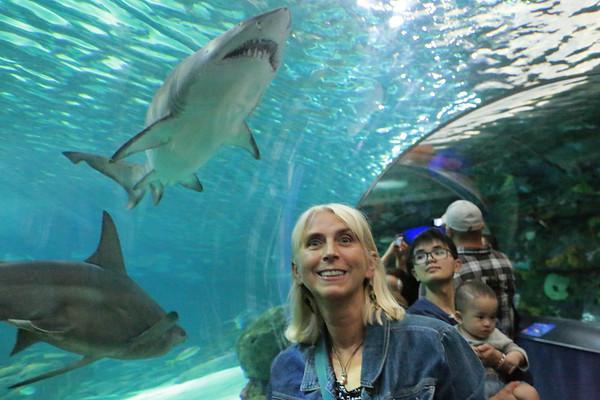 Aquarium Toronto Canada